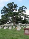 Arlington-graves-6.jpg